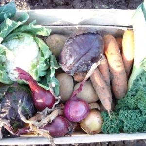 Organic vegetable box Kent