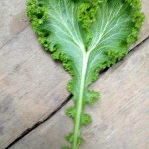 organic vegetables kent