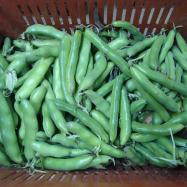 Broad beans (organic, Kent)