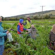Farm walk, organic vegetables kent