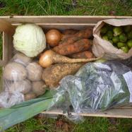 Organic vegetable box scheme kent