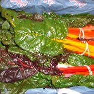 The beauty of rainbow chard, organic Kent