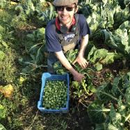 Sprout harvest December 2018